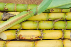 Close up Sugarcane Stock Images