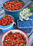 Close up of summer gather of berries. Close up with harvest of summer berry, summer background with strawberry and honeyberry on wooden planks stock image