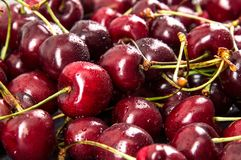 Close up. Summer harvest of sweet cherries. A pile of freshly washed burgundy berries