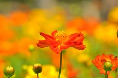 Close up of summer wildflowers. Closeup of bright orange colored summer wild flowers with beautiful bokeh background Stock Images