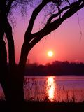 Close-up of the sun reflected in a beautiful lake with shadow of weeping willow in foreground royalty free stock photography