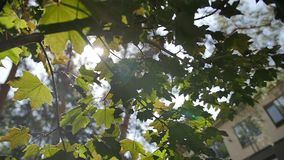 Nature background. Beautiful Sun shine through the blowing on wind tree green leaves. Blurred abstract bokeh with sun. CLOSE UP: Sunbeams shining through lush stock footage