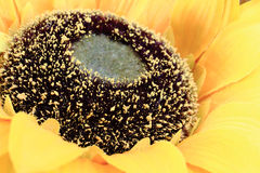 Close up sunflower plastic model Royalty Free Stock Images