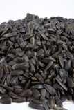 Close-up of sunflower seed Royalty Free Stock Photo