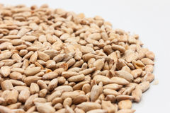 Close up Sunflower seed Stock Photography