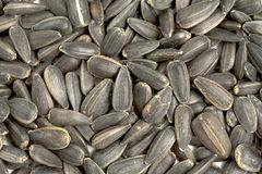 Close up sunflower seeds Royalty Free Stock Image