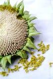 Close up of sunflower Stock Photos