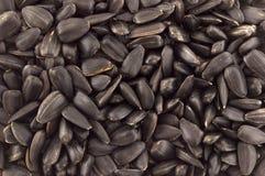 Close up of sunflower seeds Stock Photos