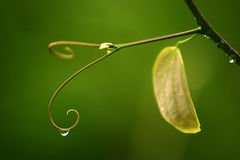 Close up super macro shot water drop on leaf and flower Stock Photos
