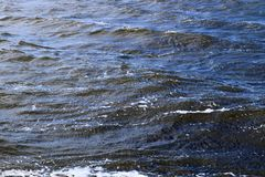 Close up surface of floating water with ripples and waves and some reflections. Taken on the seychelles stock image
