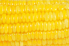 Close up sweet corn, natural texture and pattern Royalty Free Stock Photography