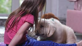 Cute puppy sniffing little child sitting on floor stock video footage