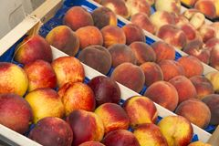 Fruit peach casserole Royalty Free Stock Photography