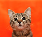 Close up of tabby cat Stock Photos