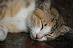 Close-up Tabby cat relaxation on stone floor, napping, fluffy kitten sleeping,. Close-up Tabby cat relaxation on stone floor, napping, fluffy kitten sleeping Stock Images