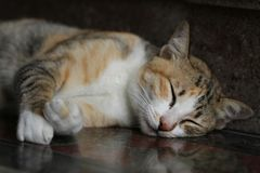 Close-up Tabby cat relaxation on stone floor, napping, fluffy kitten sleeping,. Close-up Tabby cat relaxation on stone floor, napping, fluffy kitten sleeping Royalty Free Stock Images