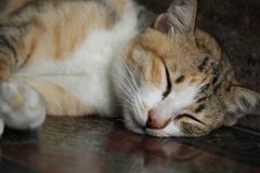 Close-up Tabby cat relaxation on stone floor, napping, fluffy kitten sleeping,. Close-up Tabby cat relaxation on stone floor, napping, fluffy kitten sleeping Stock Photography