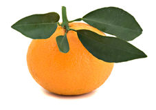 Close up of tangerine. Isloated on white background Royalty Free Stock Image