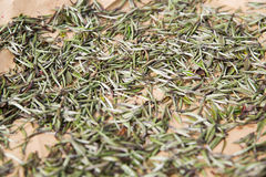Close up of tea raw drying Stock Images