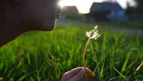Close-up of teenage girl blowing dandelion at sunset. stock video