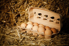 Close-up of ten fresh brown eggs in carton. Close-up of ten fresh brown eggs in cardboard carton on straw Royalty Free Stock Images