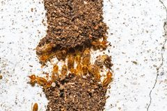 Close up termites or white ants destroyed on white concrete. On natural light stock photo