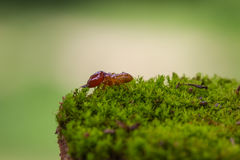 Close up termites or white ants destroyed. On green moss in forest royalty free stock photos