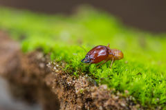 Close up termites or white ants destroyed. On green moss in forest stock photography