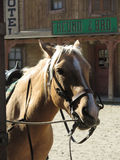 Close-up of tethered horse Royalty Free Stock Image