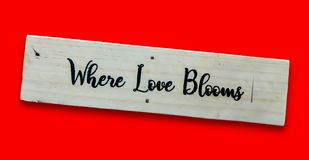 Close up texts `When Love Blooms. ` on wooden board, Love and valentine`s day concept background stock images