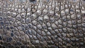 Close up texture of alligator skin Stock Photos