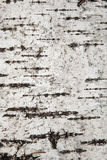 Close up texture of birch bark, background Stock Photo