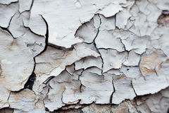 Close Up texture of Chipped White peeling paint, covered with cr Stock Images