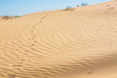 Insect or lizard traces in desert sand royalty free stock images