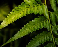 Close up on texture of green leaves royalty free stock photo