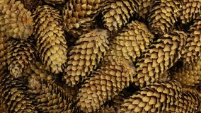 Close-up, texture of heap conifer cones. Rotation. Background of cones.