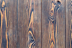 Close-up texture larch wood Royalty Free Stock Images