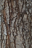 Close up texture of pine bark wood use as natural plank backgrou Stock Photography