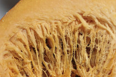Close-up texture of a pumpkin Stock Images