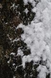 Close-up of the texture of a snow-covered tree bark with a soft background. stock photos