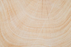 Close Up texture of tree circumference trunk after being cut. Close Up texture of tree circumference trunk after being cut royalty free stock photos