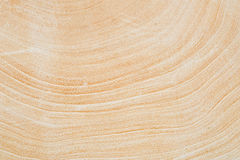 Close Up texture of tree circumference trunk after being cut. Close Up texture of tree circumference trunk after being cut royalty free stock images