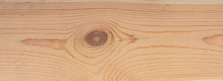 Close-up texture of a tree. Photo texture of a cut of a natural pine tree close-up Stock Image
