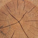 Close-up texture of a tree. Photo texture of a cut of a natural pine tree close-up Royalty Free Stock Photo