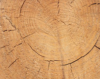 Close-up texture of a tree. Photo texture of a cut of a natural pine tree close-up Stock Images