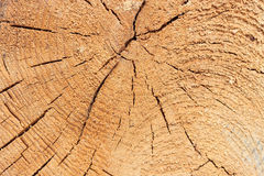 Close-up texture of a tree Stock Images