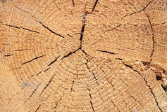 Close-up texture of a tree Stock Photography