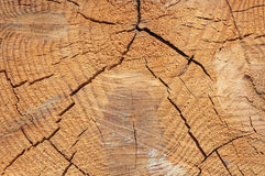 Close-up texture of a tree. Photo texture of a cut of a natural pine tree close-up Stock Photography