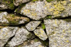 Close-up Textured background irregular natural stone wall is made of different stones with elements of natural. Vegetation in the form of green moosa of mold Stock Image