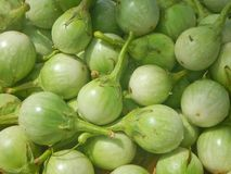 Close up Thai Eggplant Stock Photography